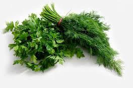 Бизнес-идея по выращиванию зелени.